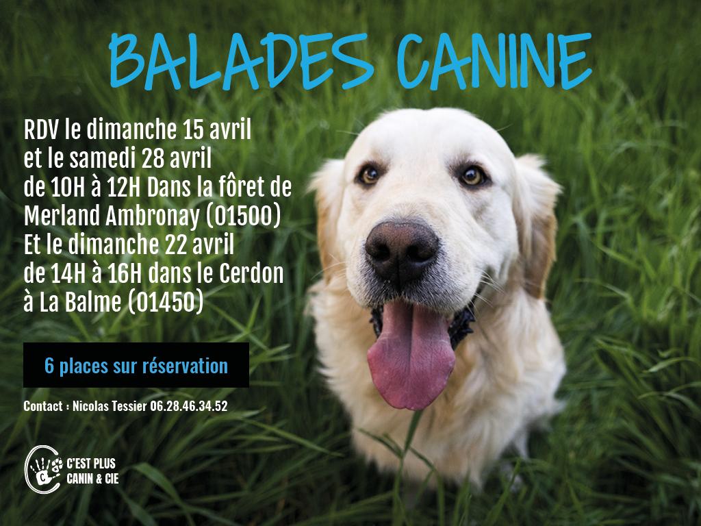 Balade Canine – Fôret de Merland (Ambronay)