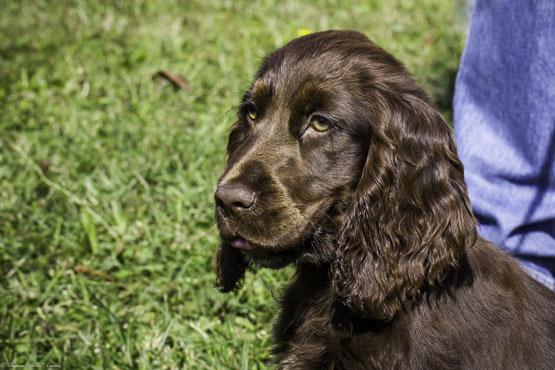 Balade Canine