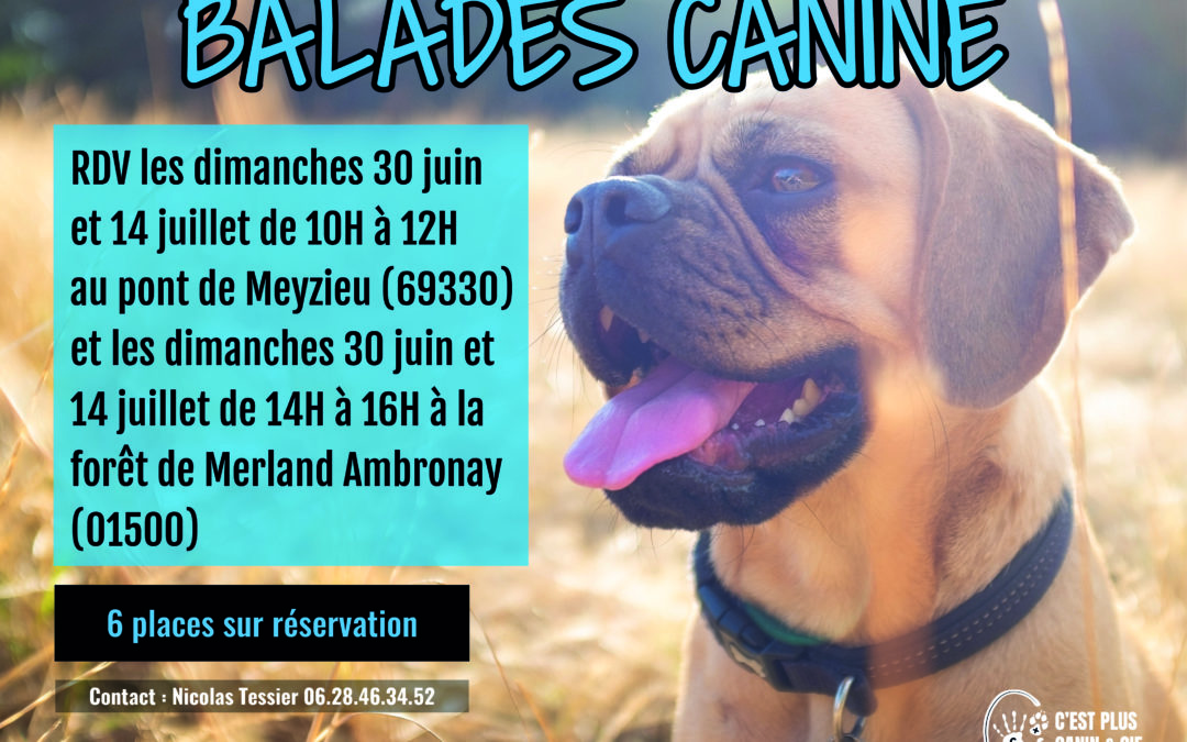 Balades Canines Miribel-Jonage