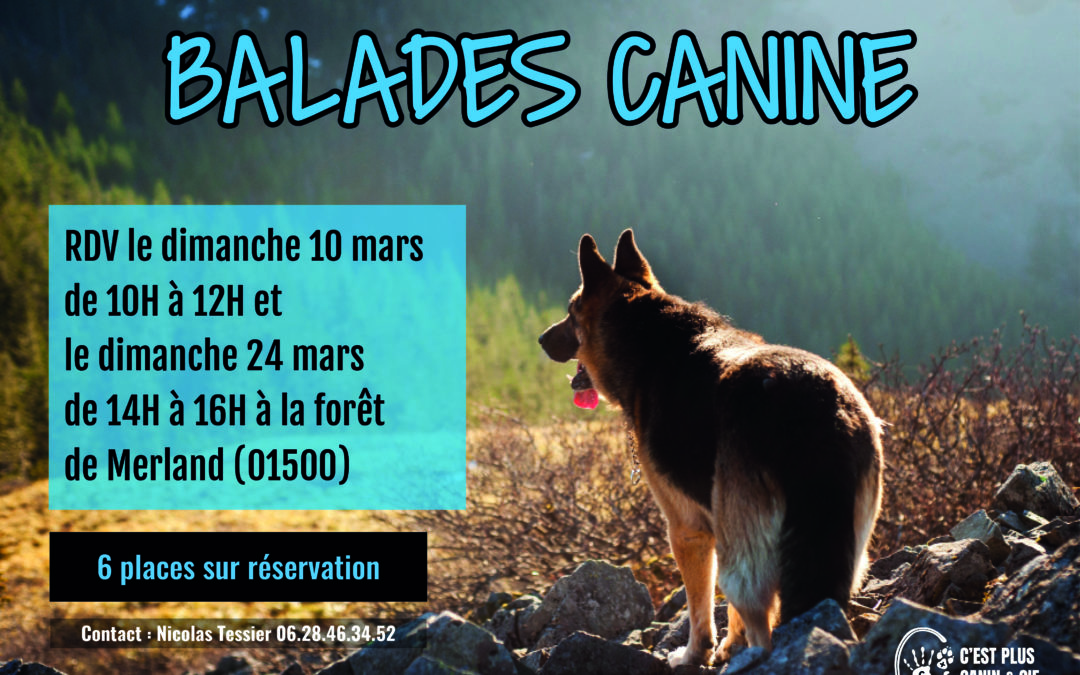 Balades Canine à la Forêt de Merland