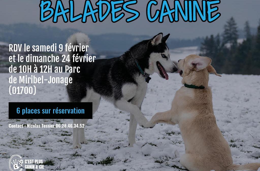 Balades Canine Miribel-Jonage