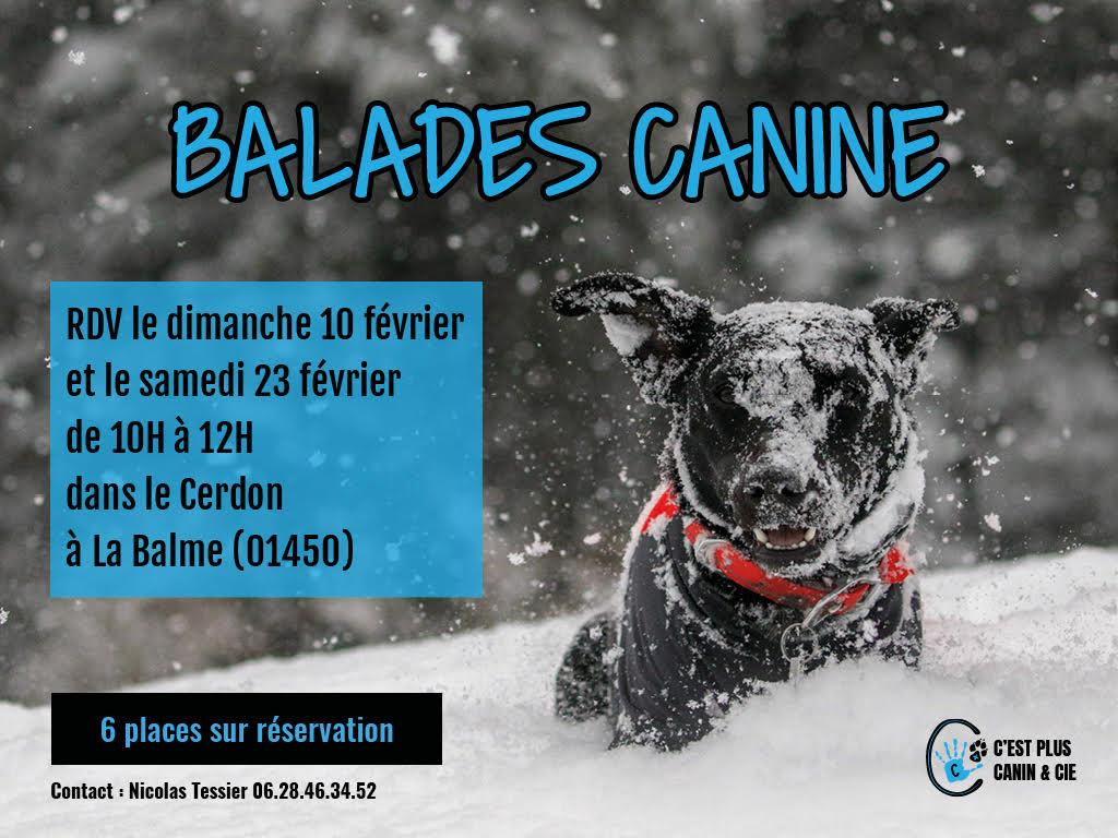 Balades Canine