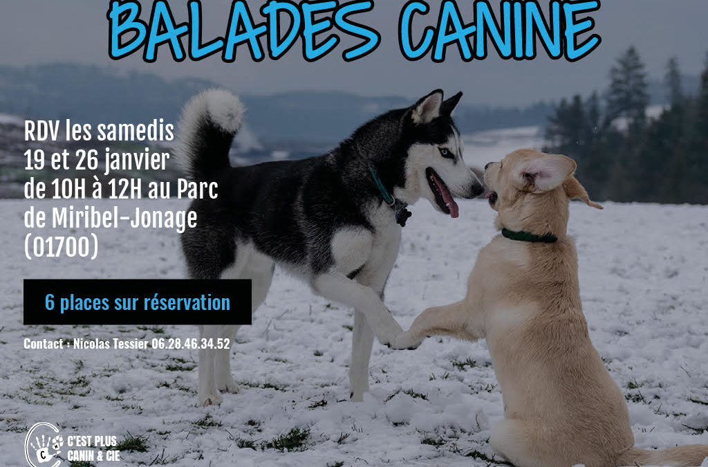 Balades Canine Miribel-Jonage