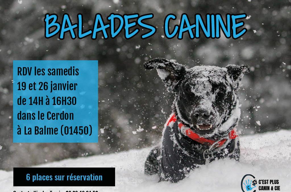 Balades canine dans le Cerdon