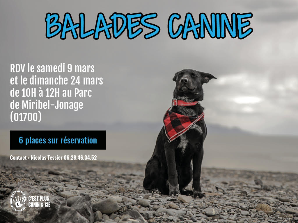 Balades Canines