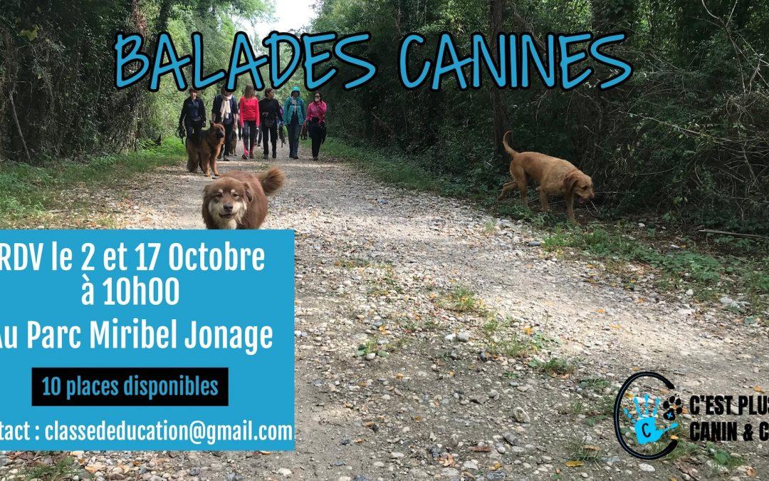 Balades Canines Miribel Octobre 2021