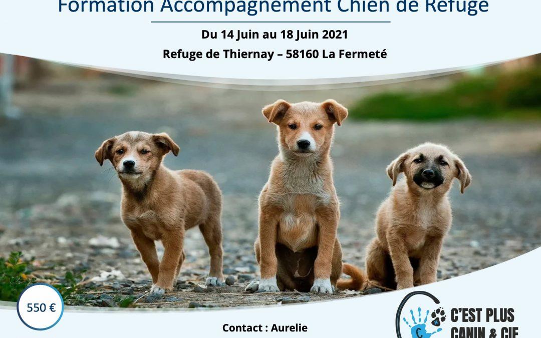 Accompagnement Chien de Refuge – Du 14 Juin au 18 Juin 2021