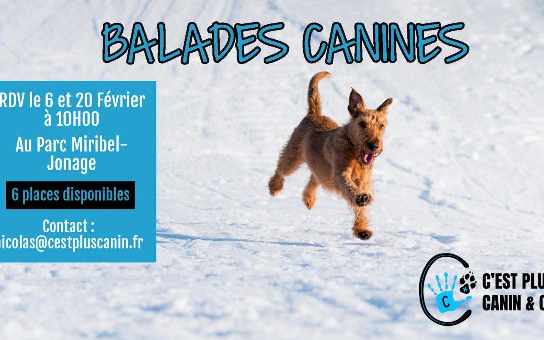 Balades Canines Miribel